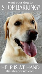 Barking Dog Complaint Letter Template - Labrador Barking Help and Information the Labrador Site