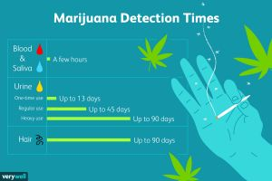 Failed Pre Employment Drug Test Letter Template - How Long is Marijuana Detectable In Your System