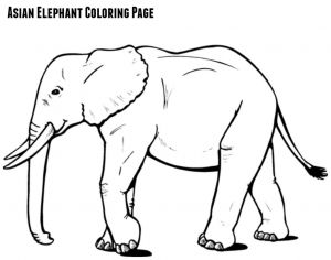 Letter E Elephant Template - asian Elephant Coloring Page Jenny at Dapperhouse